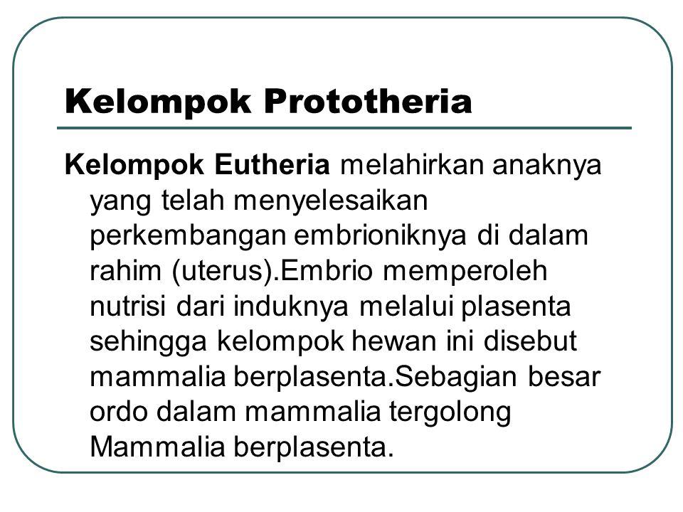 Kelompok Prototheria Kelompok Eutheria melahirkan anaknya yang telah menyelesaikan perkembangan embrioniknya di dalam rahim (uterus).Embrio memperoleh nutrisi dari induknya melalui plasenta sehingga kelompok hewan ini disebut mammalia berplasenta.Sebagian besar ordo dalam mammalia tergolong Mammalia berplasenta.