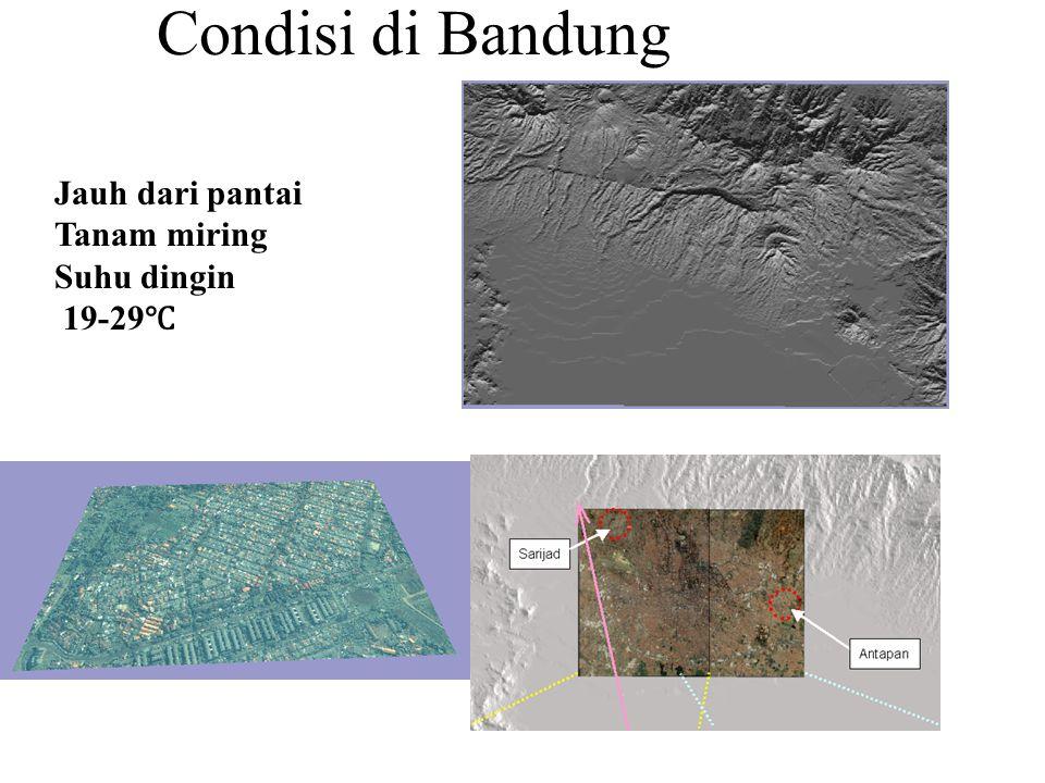 Condisi di Bandung Jauh dari pantai Tanam miring Suhu dingin 19-29 ℃