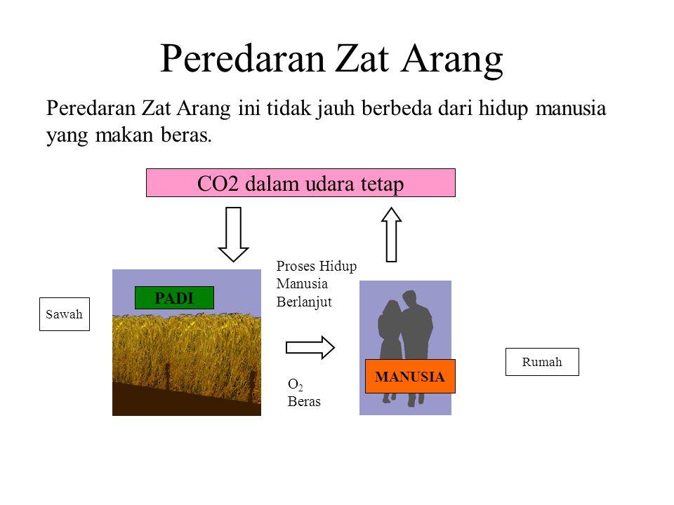 Peredaran Zat Arang Peredaran Zat Arang ini tidak jauh berbeda dari hidup manusia yang makan beras.