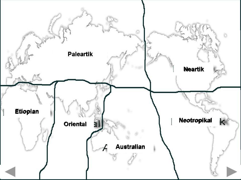 Etiopian Oriental Australian Neotropikal Neartik Paleartik