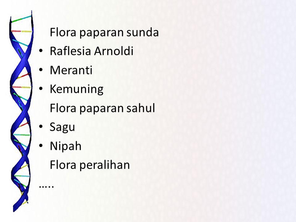 Flora paparan sunda Raflesia Arnoldi Meranti Kemuning Flora paparan sahul Sagu Nipah Flora peralihan …..