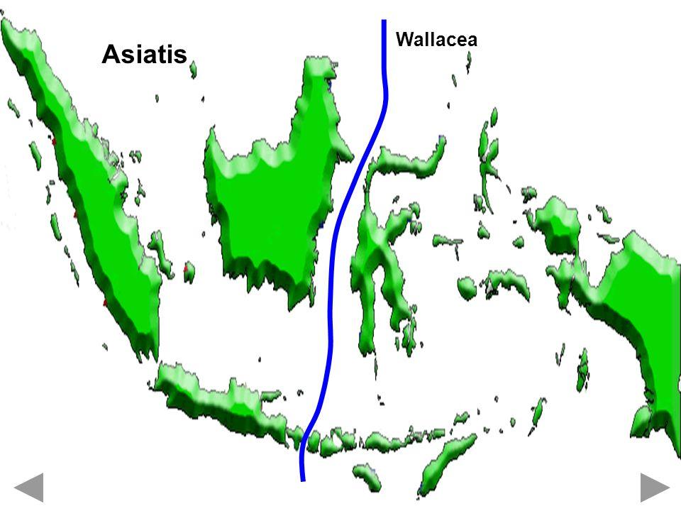 Wallacea Asiatis