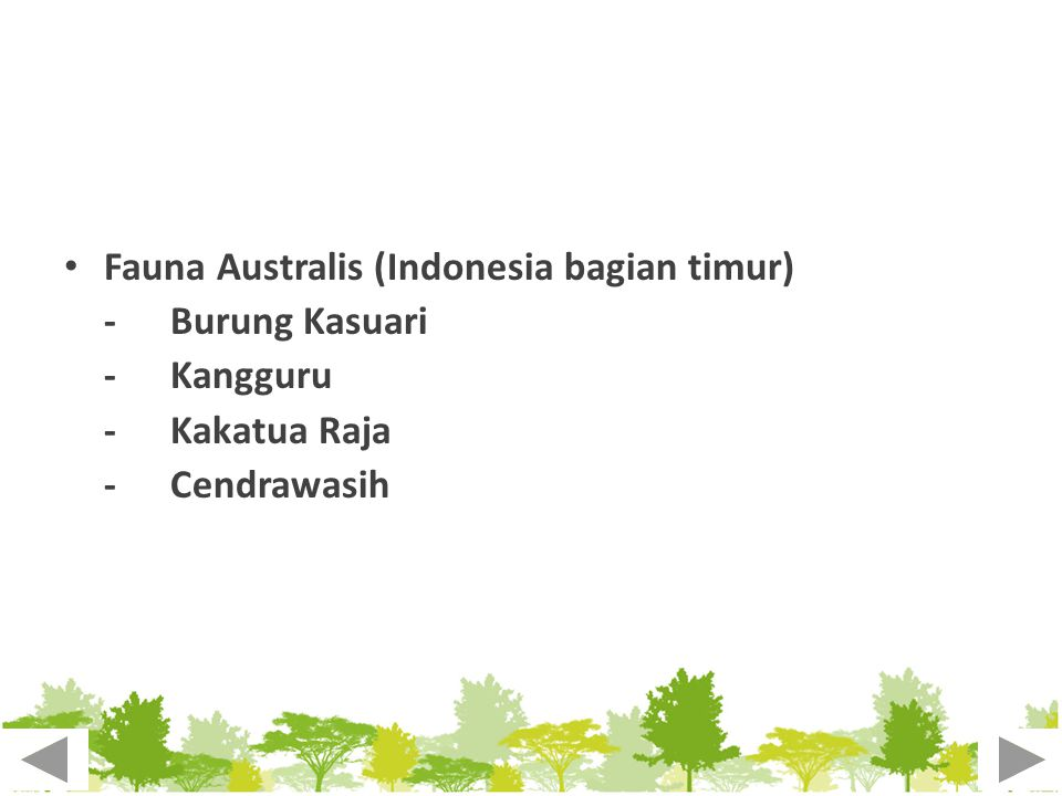 Fauna Australis (Indonesia bagian timur) - Burung Kasuari -Kangguru -Kakatua Raja -Cendrawasih