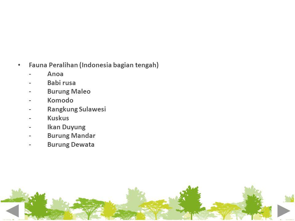 Fauna Peralihan (Indonesia bagian tengah) -Anoa -Babi rusa -Burung Maleo -Komodo -Rangkung Sulawesi -Kuskus -Ikan Duyung -Burung Mandar -Burung Dewata