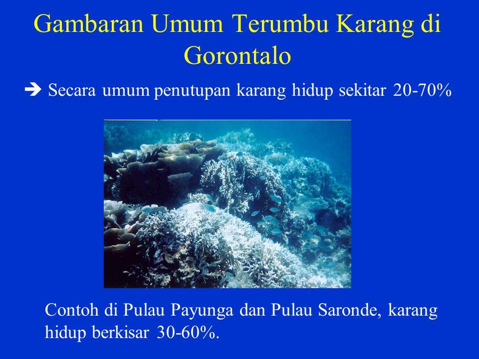 Gambaran Umum Terumbu Karang di Gorontalo  Secara umum penutupan karang hidup sekitar 20-70% Contoh di Pulau Payunga dan Pulau Saronde, karang hidup