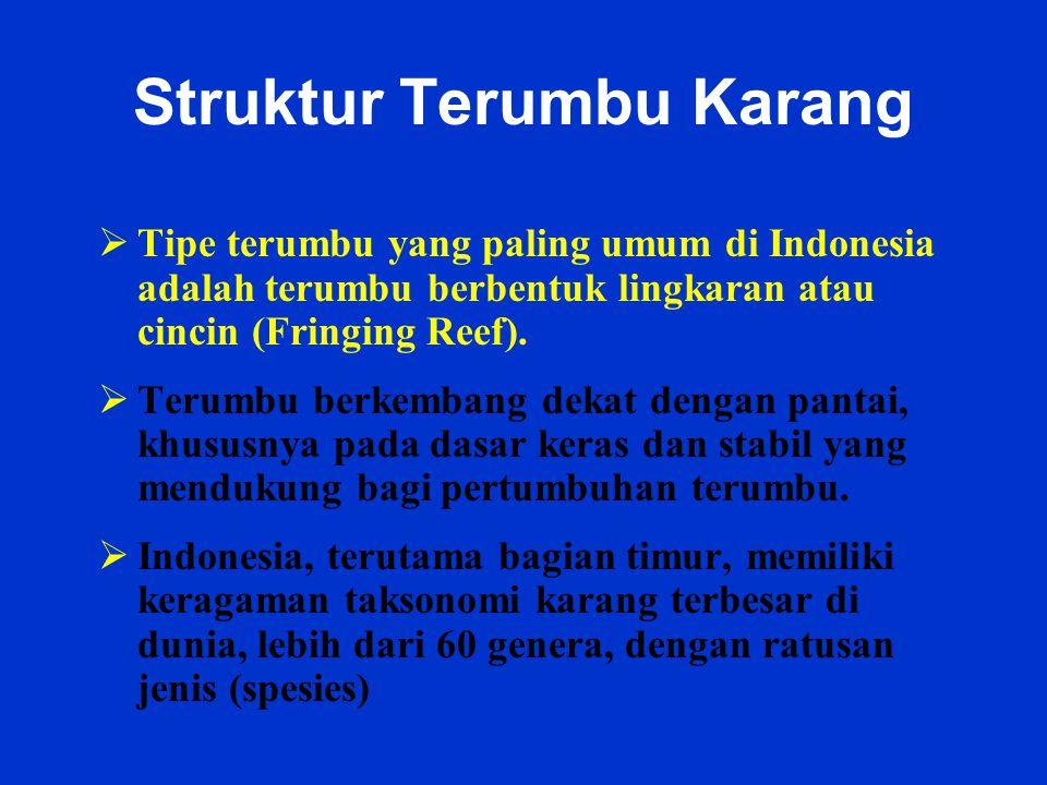 Struktur Terumbu Karang  Tipe terumbu yang paling umum di Indonesia adalah terumbu berbentuk lingkaran atau cincin (Fringing Reef).  Terumbu berkemb