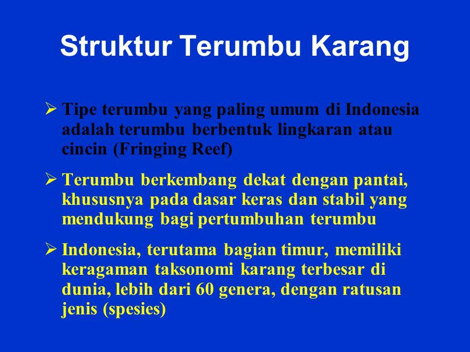 Struktur Terumbu Karang  Tipe terumbu yang paling umum di Indonesia adalah terumbu berbentuk lingkaran atau cincin (Fringing Reef)  Terumbu berkemba