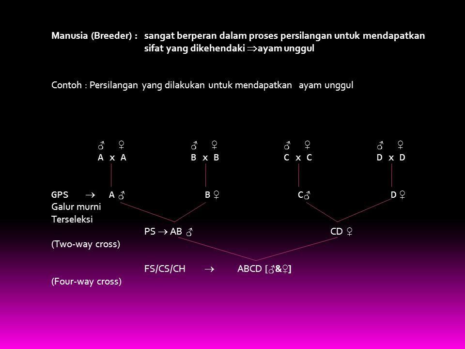 Manusia (Breeder) : sangat berperan dalam proses persilangan untuk mendapatkan sifat yang dikehendaki  ayam unggul Contoh : Persilangan yang dilakukan untuk mendapatkan ayam unggul ♂ ♀ ♂ ♀ A x A B x B C x C D x D GPS  A ♂ B ♀ C ♂ D ♀ Galur murni Terseleksi PS  AB ♂ CD ♀ (Two-way cross) FS/CS/CH  ABCD [ ♂ & ♀ ] (Four-way cross)