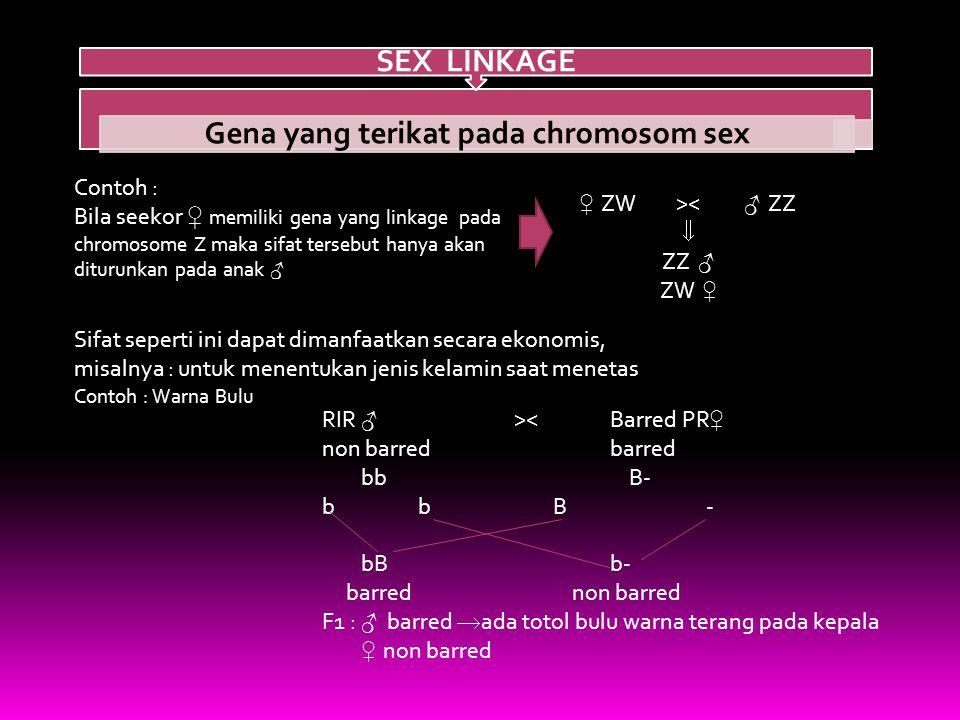 Gena yang terikat pada chromosom sex SEX LINKAGE Contoh : Bila seekor ♀ memiliki gena yang linkage pada chromosome Z maka sifat tersebut hanya akan diturunkan pada anak ♂ ♀ ZW>< ♂ ZZ  ZZ ♂ ZW ♀ Sifat seperti ini dapat dimanfaatkan secara ekonomis, misalnya : untuk menentukan jenis kelamin saat menetas Contoh : Warna Bulu RIR ♂ >< Barred PR ♀ non barred barred bb B- bBb- barred non barred F1 : ♂ barred  ada totol bulu warna terang pada kepala ♀ non barred