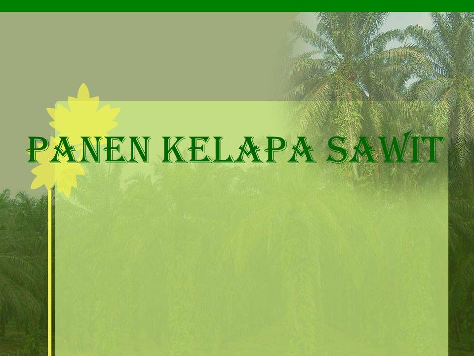 e)Penanaman Tanaman Penutup Tanah Tanaman penutup tanah yang baik biasanya berupa jenis tanaman kacang-kacangan (Leguminosa).
