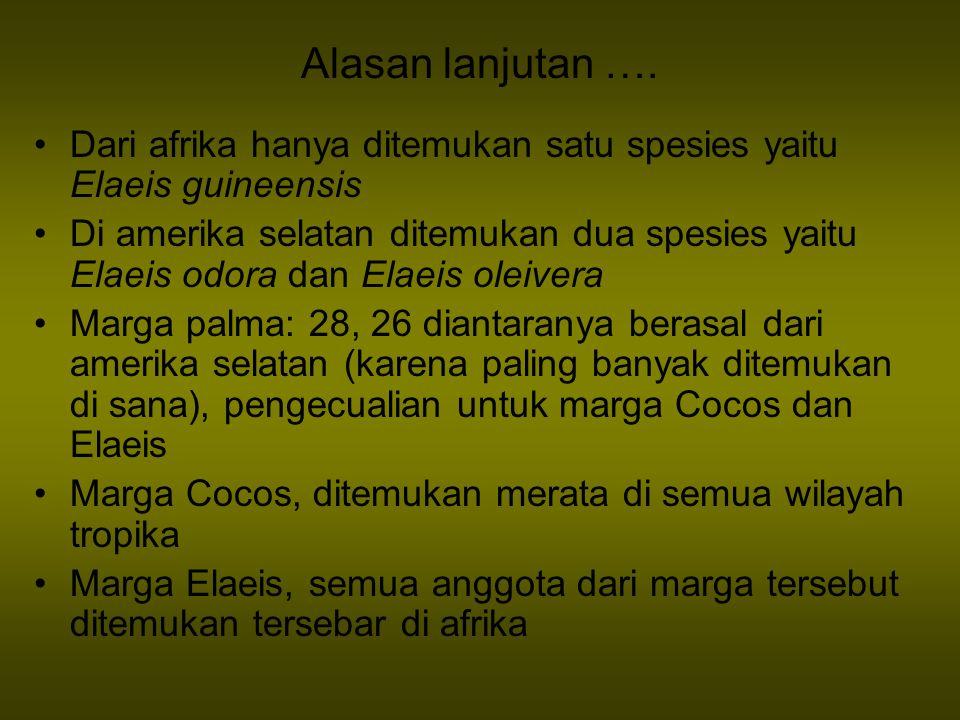 Alasan lanjutan …. Dari afrika hanya ditemukan satu spesies yaitu Elaeis guineensis Di amerika selatan ditemukan dua spesies yaitu Elaeis odora dan El