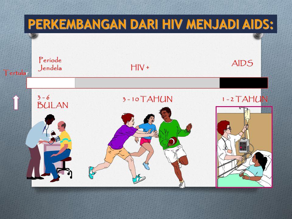 PERKEMBANGAN DARI HIV MENJADI AIDS: 3 - 6 BULAN 3 - 10 TAHUN 1 - 2 TAHUN Periode Jendela HIV + AIDS Tertular