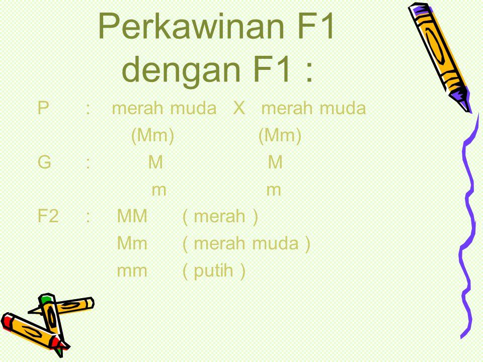 Perkawinan intermediet : P: merah X putih (MM) (mm) G : M m M m F1: merah muda (Mm)