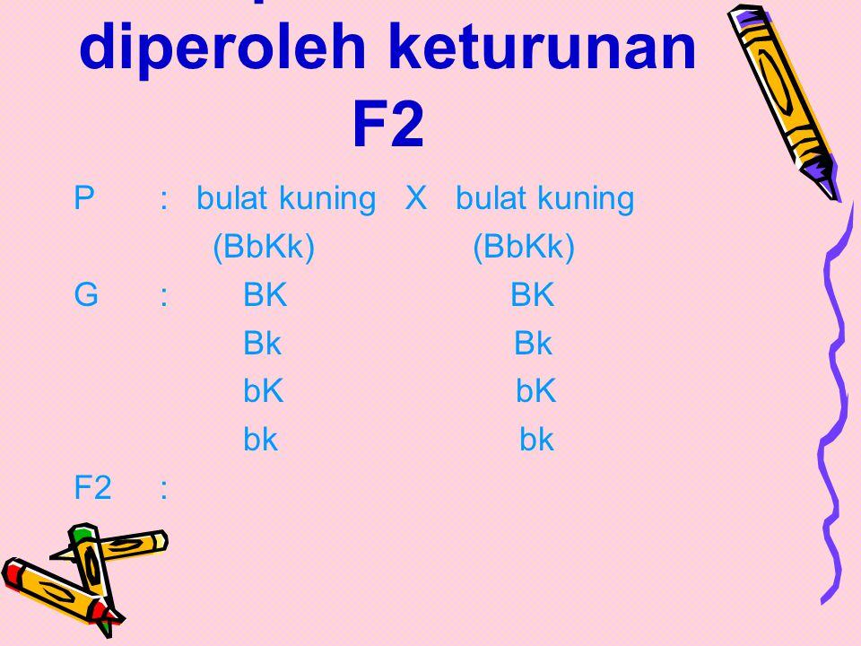 Diagram penyilangan F1: P: bulat kuning X keriput hijau (BBKK) (bbkk) G: BK bk F1: bulat kuning (BbKk) Keturunan F1 : 100% bulat kuning