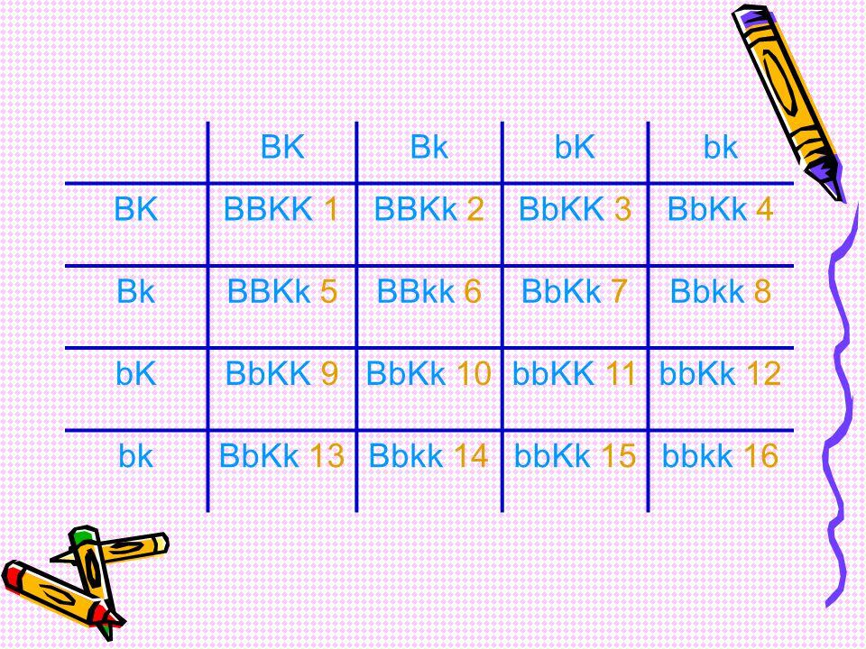 Pada perkawinan F1 diperoleh keturunan F2 P: bulat kuning X bulat kuning (BbKk) (BbKk) G: BK BK Bk Bk bK bK bk bk F2: