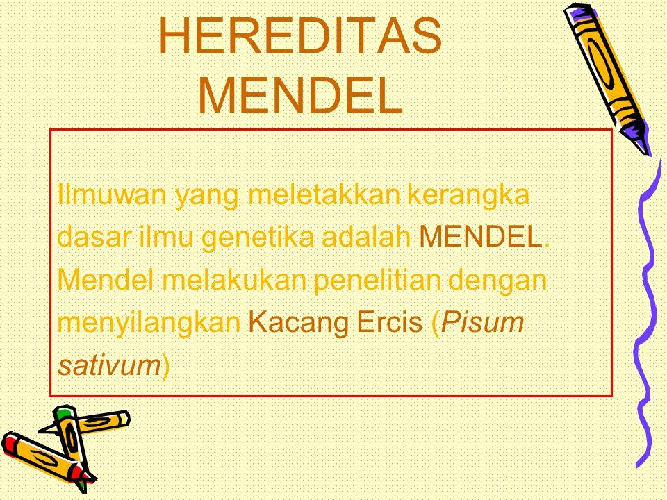 HEREDITAS MENDEL HEREDITAS MENDEL HEREDITAS MENDEL HEREDITAS MENDEL HUKUM MENDEL I HUKUM MENDEL I HUKUM MENDEL II HUKUM MENDEL II