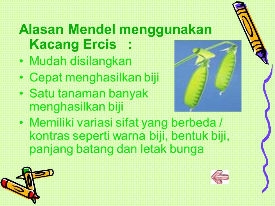 HEREDITAS MENDEL Ilmuwan yang meletakkan kerangka dasar ilmu genetika adalah MENDEL. Mendel melakukan penelitian dengan menyilangkan Kacang Ercis (Pis