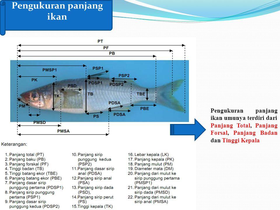 Pengukuran panjang ikan Pengukuran panjang ikan umunya terdiri dari Panjang Total, Panjang Forsal, Panjang Badan dan Tinggi Kepala