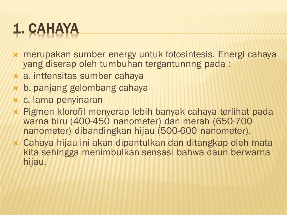  merupakan sumber energy untuk fotosintesis. Energi cahaya yang diserap oleh tumbuhan tergantunnng pada :  a. inttensitas sumber cahaya  b. panjang