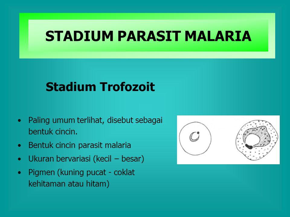 Stadium Trofozoit Paling umum terlihat, disebut sebagai bentuk cincin. Bentuk cincin parasit malaria Ukuran bervariasi (kecil – besar) Pigmen (kuning