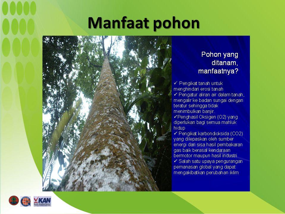 Manfaat pohon