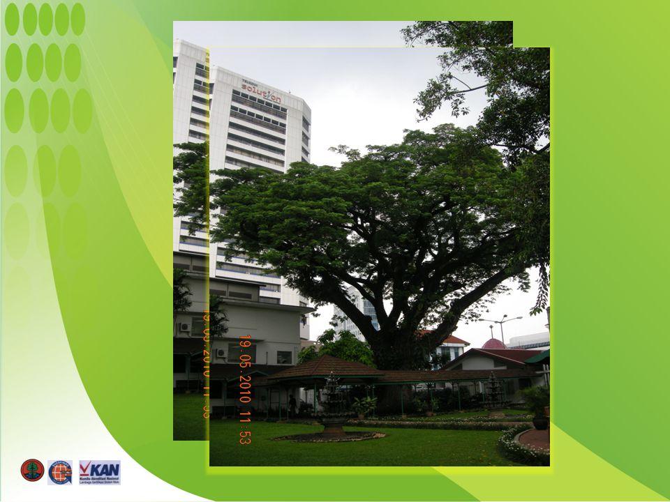 Sepuluh jenis pohon dengan nilai total karbon tertinggi di Taman Kota Monas Sepuluh jenis pohon dengan nilai total karbon tertinggi di Taman Kota Monas No.Jenis pohon Diameter rata- rata (cm) Tinggi Rata-rata (m) Total karbon (ton) Jumlah pohon 1Trembesi46,638,7766,69205 2Mahoni29,326,5384,77219 3Pelem raja39,29,6362,4397 4Angsana52,428,5196,9745 5Glodogan tiang21,637,9147,3092 6Bungur15,854,3145,70205 7Kupu-kupu18,354,9119,28114 8Tanjung12,397,380,0519 9Krey payung24,226,442,7320 10Salam25,306,245,5230