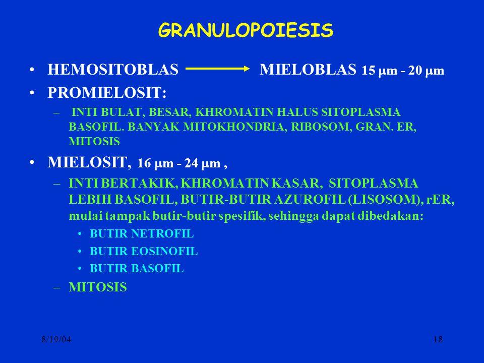 8/19/0418 GRANULOPOIESIS HEMOSITOBLAS MIELOBLAS 15  m - 20  m PROMIELOSIT: – INTI BULAT, BESAR, KHROMATIN HALUS SITOPLASMA BASOFIL. BANYAK MITOKHOND