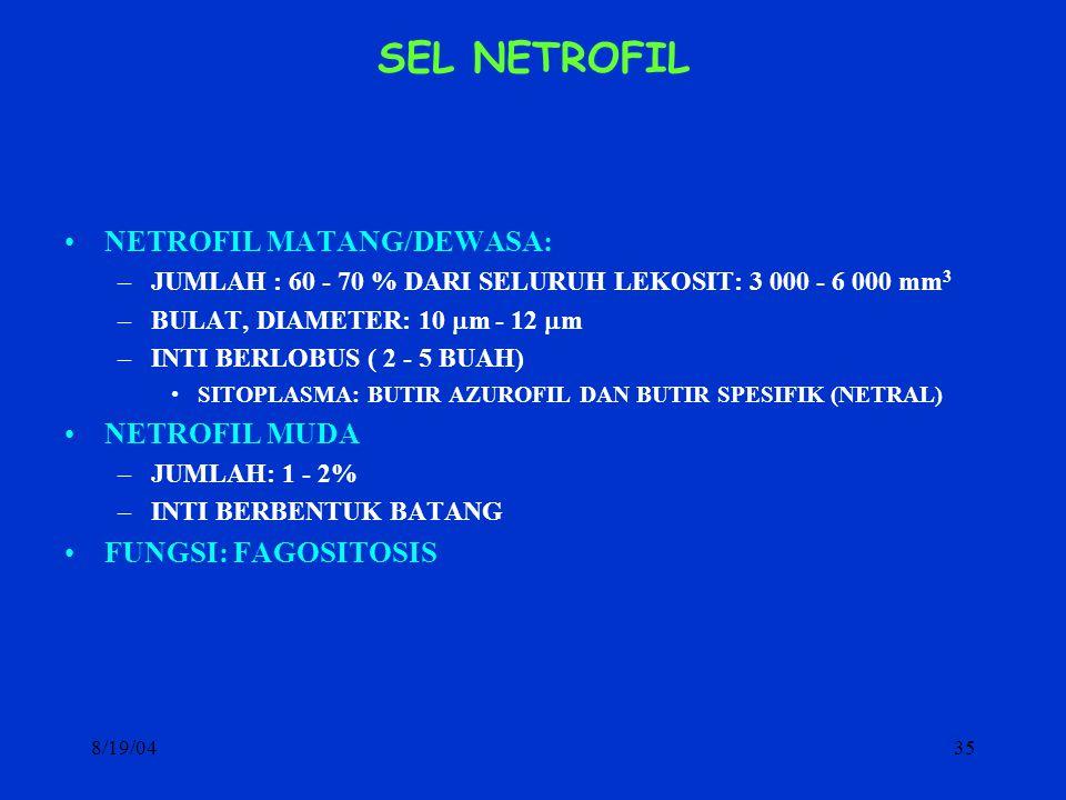 8/19/0435 SEL NETROFIL NETROFIL MATANG/DEWASA: –JUMLAH : 60 - 70 % DARI SELURUH LEKOSIT: 3 000 - 6 000 mm 3 –BULAT, DIAMETER: 10  m - 12  m –INTI BE