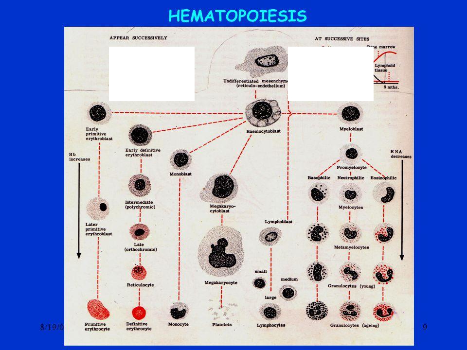 8/19/0420 GRANULOPOIESIS HEMOSITOBLAS MIELOBLAS PROMIELOSIT MIELOSIT METAMIELOSIT GRANULOSIT N BE