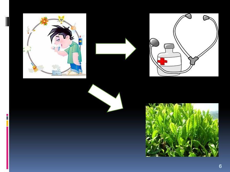IDENTIFIKASI MASALAH Apakah teh hijau meningkatkan Volume Ekspirasi Paksa detik pertama (VEP 1 ) laki-laki dewasa normal 7