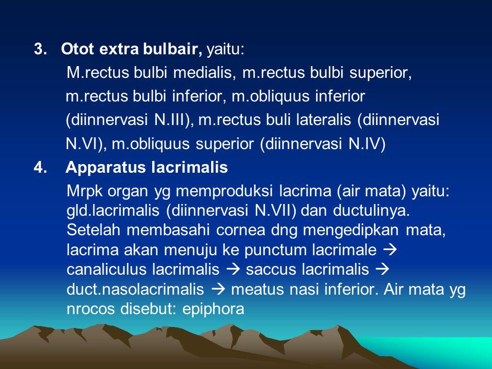 3. Otot extra bulbair, yaitu: M.rectus bulbi medialis, m.rectus bulbi superior, m.rectus bulbi inferior, m.obliquus inferior (diinnervasi N.III), m.re