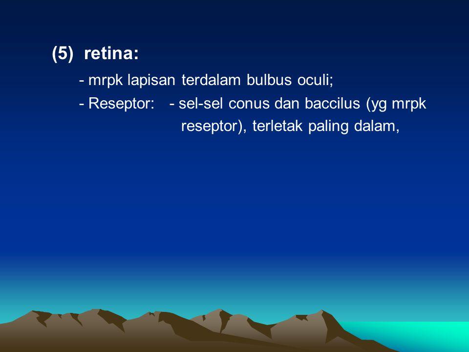 (5) retina: - mrpk lapisan terdalam bulbus oculi; - Reseptor: - sel-sel conus dan baccilus (yg mrpk reseptor), terletak paling dalam,
