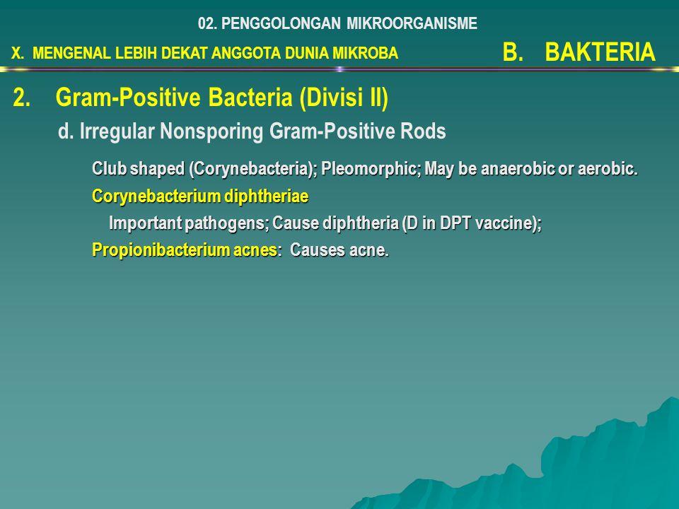 X. MENGENAL LEBIH DEKAT ANGGOTA DUNIA MIKROBA 02. PENGGOLONGAN MIKROORGANISME B.BAKTERIA 2.Gram-Positive Bacteria (Divisi II) d. Irregular Nonsporing