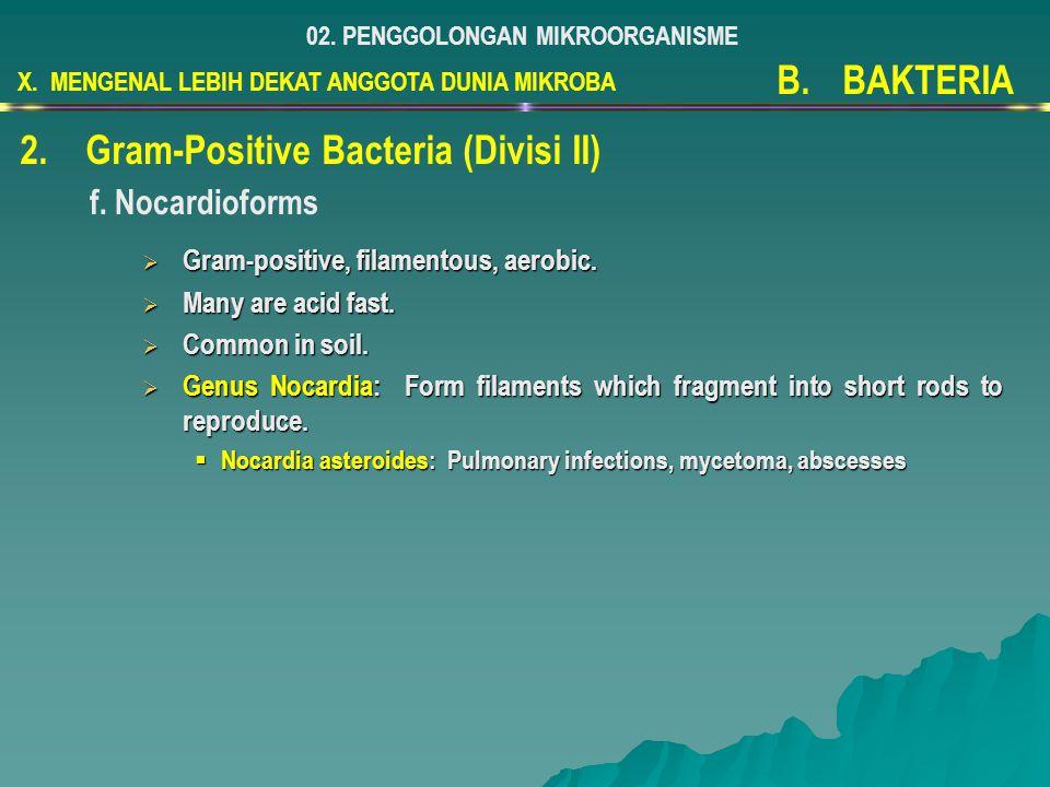 X. MENGENAL LEBIH DEKAT ANGGOTA DUNIA MIKROBA 02. PENGGOLONGAN MIKROORGANISME B.BAKTERIA 2.Gram-Positive Bacteria (Divisi II) f. Nocardioforms  Gram-