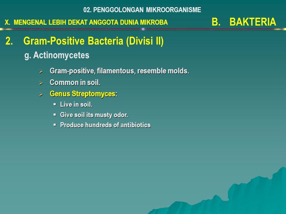 X. MENGENAL LEBIH DEKAT ANGGOTA DUNIA MIKROBA 02. PENGGOLONGAN MIKROORGANISME B.BAKTERIA 2.Gram-Positive Bacteria (Divisi II) g. Actinomycetes  Gram-