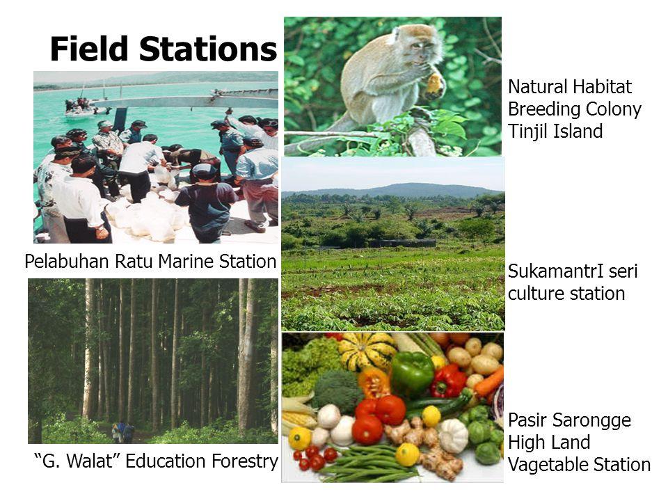 Field Stations Pelabuhan Ratu Marine Station SukamantrI seri culture station Natural Habitat Breeding Colony Tinjil Island G.