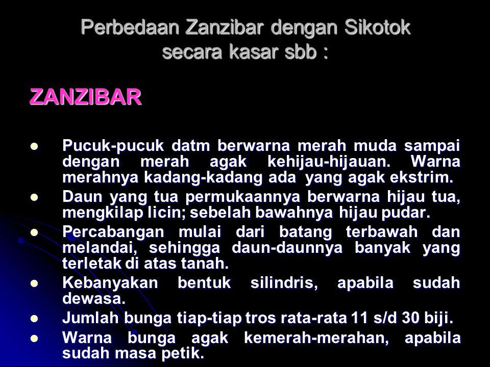 Perbedaan Zanzibar dengan Sikotok secara kasar sbb : ZANZIBAR Pucuk-pucuk datm berwarna merah muda sampai dengan merah agak kehijau-hijauan. Warna mer
