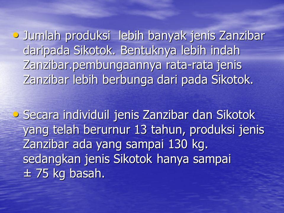 Jumlah produksi lebih banyak jenis Zanzibar daripada Sikotok. Bentuknya lebih indah Zanzibar.pembungaannya rata-rata jenis Zanzibar lebih berbunga dar