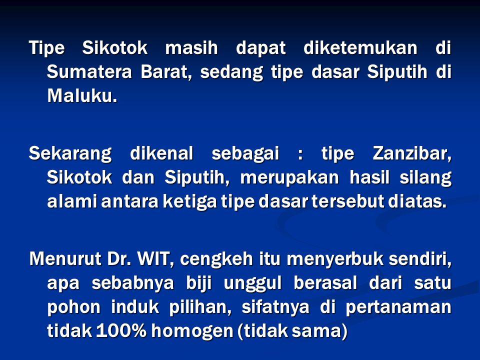Tipe Sikotok masih dapat diketemukan di Sumatera Barat, sedang tipe dasar Siputih di Maluku. Sekarang dikenal sebagai : tipe Zanzibar, Sikotok dan Sip