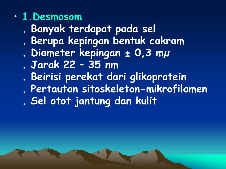 3 macam pertautan antar sel: 1.Desmosom 2. Tight junction 3. Gap junction