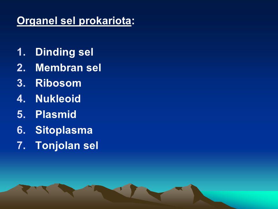 Organel sel prokariota: 1.Dinding sel 2.Membran sel 3.Ribosom 4.Nukleoid 5.Plasmid 6.Sitoplasma 7.Tonjolan sel