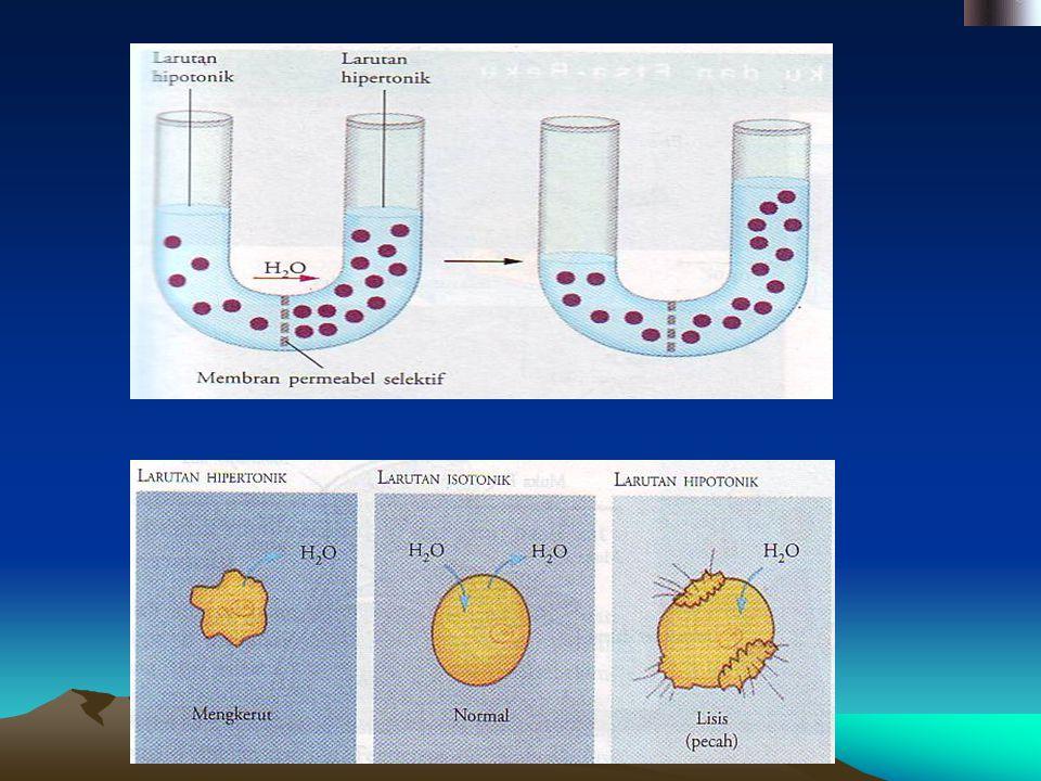 OSMOSA * Merupakan transpor pasif air * Membandingkan dua larutan dg konsent- rasi zat terlarut dlm air berbeda. * Konsentrasi zat terlarut tinggi (pe