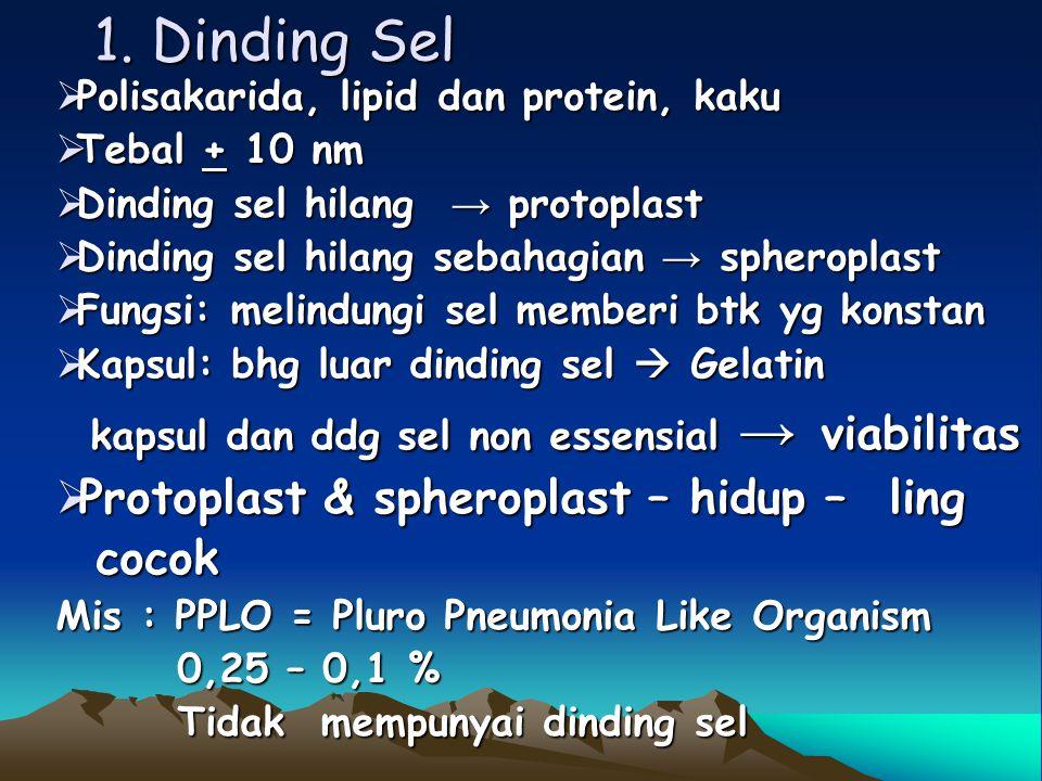 - protein integral  tertanam pd bilayer lipid protein periferal  tdk tertanam pd bilayer lipid - karbo hidrat  f/ pengenalan sel dg sel te- tangga atau dg sel-sel lain.