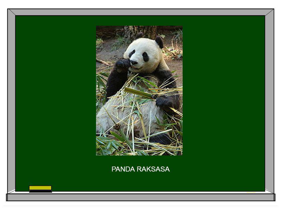 Panda raksasa (Ailuropoda melanoleuca) merupakan hewan yang terancam punah panda raksasa betina yang mengalami monoestrus dengan ovulasi spontan selama musim kawin karena memiliki tingkat kelahiran yang sangat rendah efisiensi reproduksi yang tidak baik karena dilihat dari