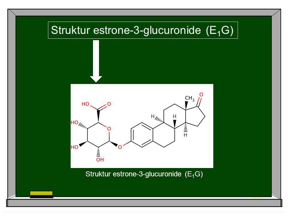 Struktur estrone-3-glucuronide (E 1 G)