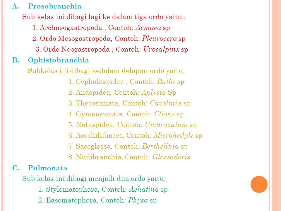 A.Prosobranchia Sub kelas ini dibagi lagi ke dalam tiga ordo yaitu : 1. Archaeogastropoda, Contoh: Acmaea sp 2. Ordo Mesogastropoda, Contoh: Pleurocer