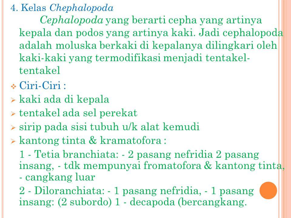 4. Kelas Chephalopoda Cephalopoda yang berarti cepha yang artinya kepala dan podos yang artinya kaki. Jadi cephalopoda adalah moluska berkaki di kepal