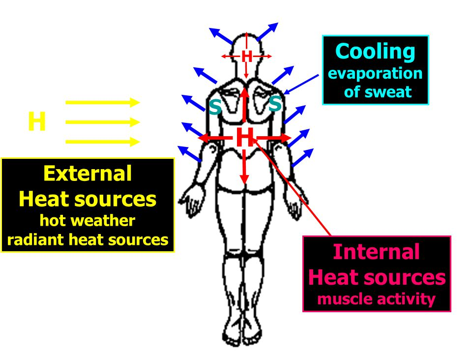 S S Cooling evaporation of sweat Heat Balance H H Internal Heat sources muscle activity H External Heat sources hot weather radiant heat sources