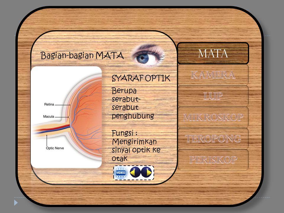 Bagian-bagian MATA SYARAF OPTIK Berupa serabut- serabut penghubung Fungsi : Mengirimkan sinyal optik ke otak MATA
