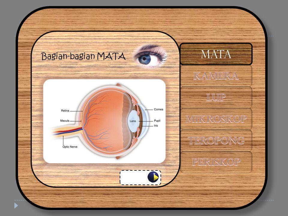 Cacat Mata Rabun jauh (MIOPI) Lensa mata tidak dapat pipih sempurna Kacamata berlensa cekung (negatif) MATA